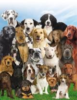 Клуб любителей собак